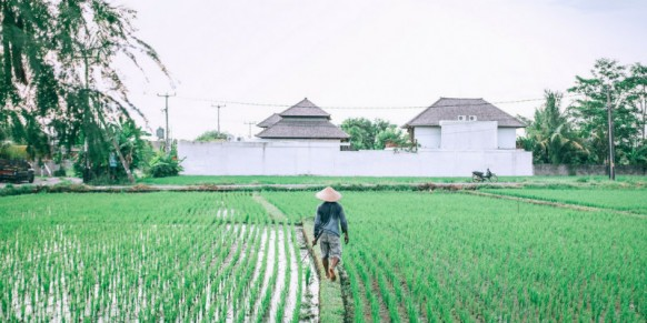 Nature vs Nature : For the Greater Good of Agriculture